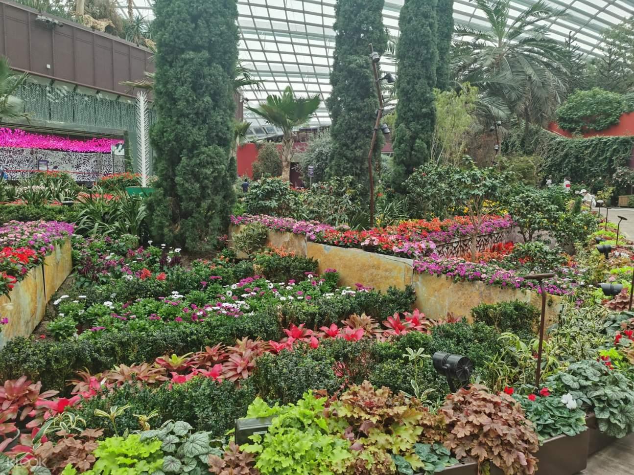 Varieties of flowers in Flower Dome