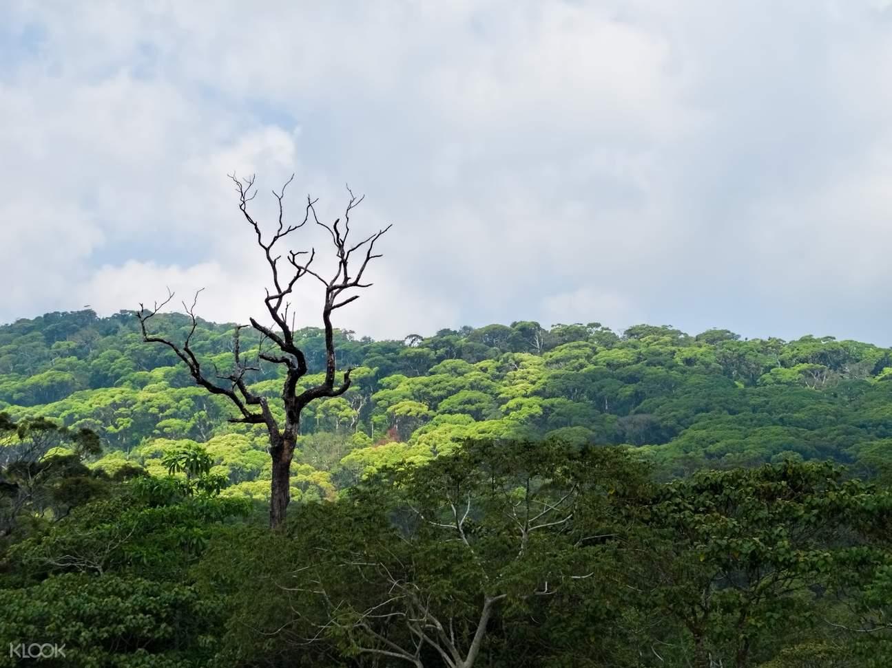 斯里兰卡 辛哈拉加热带雨林 Sinharaja