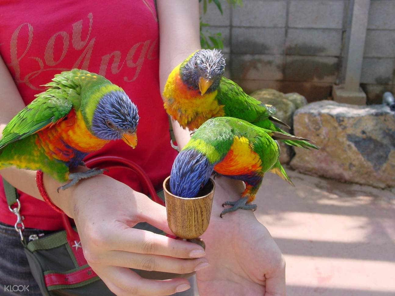 birds in okinawa fruits land