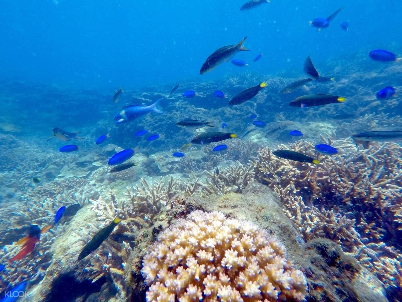 澎湖海洋生物