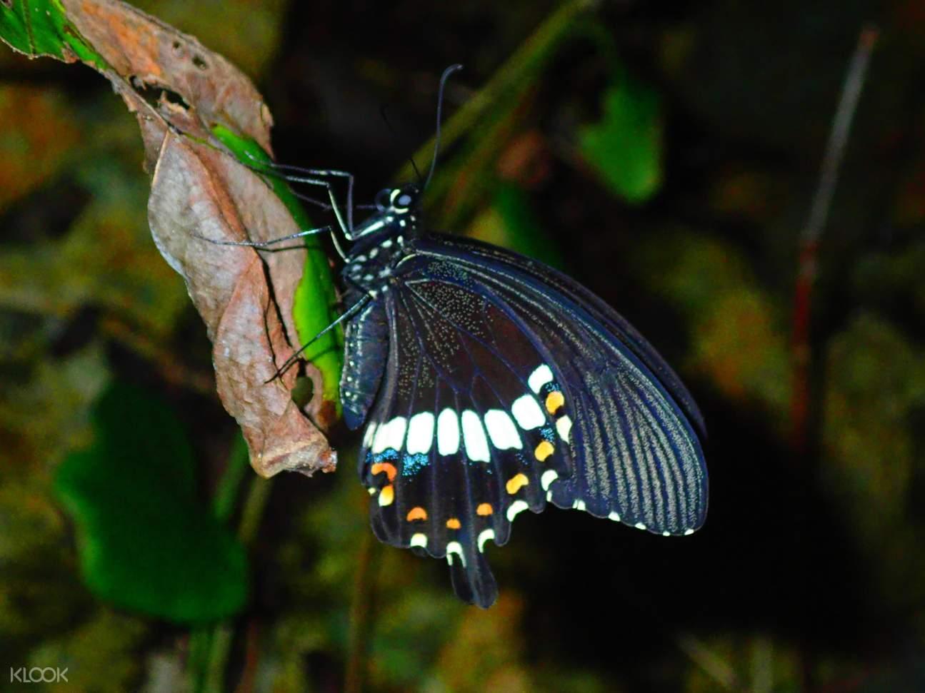 Subtropical Jungle Night Tour