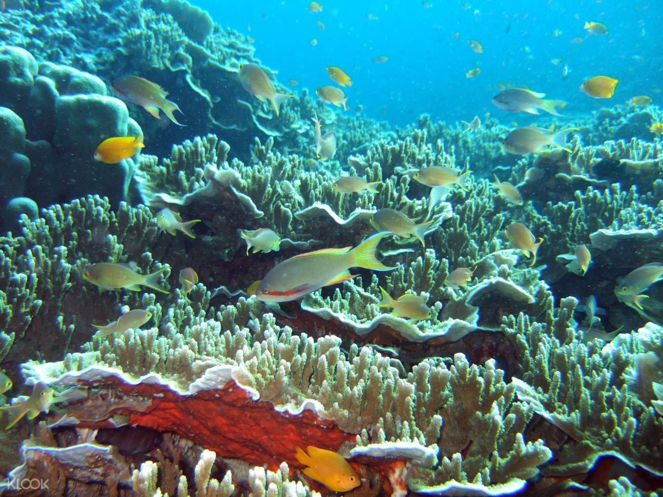Marine Life at Pescador Island Snorkeling Join In Day Tour from Cebu
