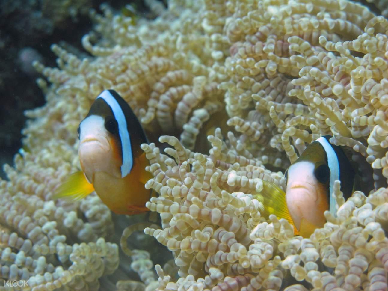 芽庄珊瑚礁