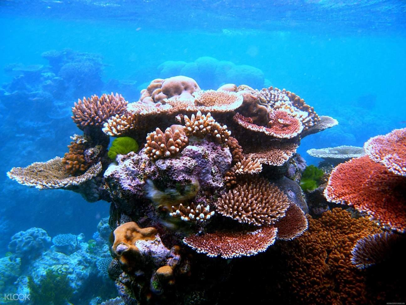 san hô ở biển cù lao chàm