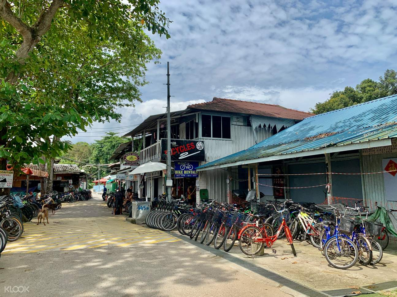 You may also have a bicycle ride in Pulau Ubin village