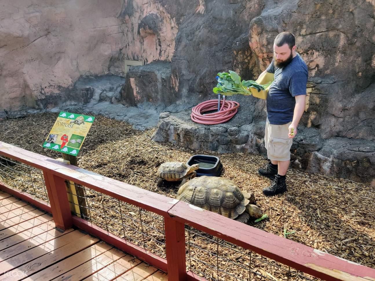 rainforest adventure zoo tortoises