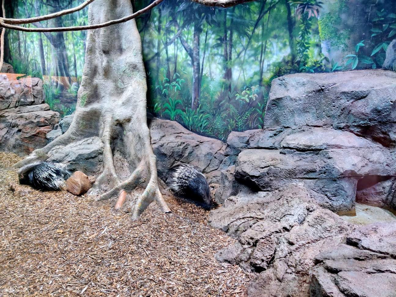 rainforest adventure zoo mammals