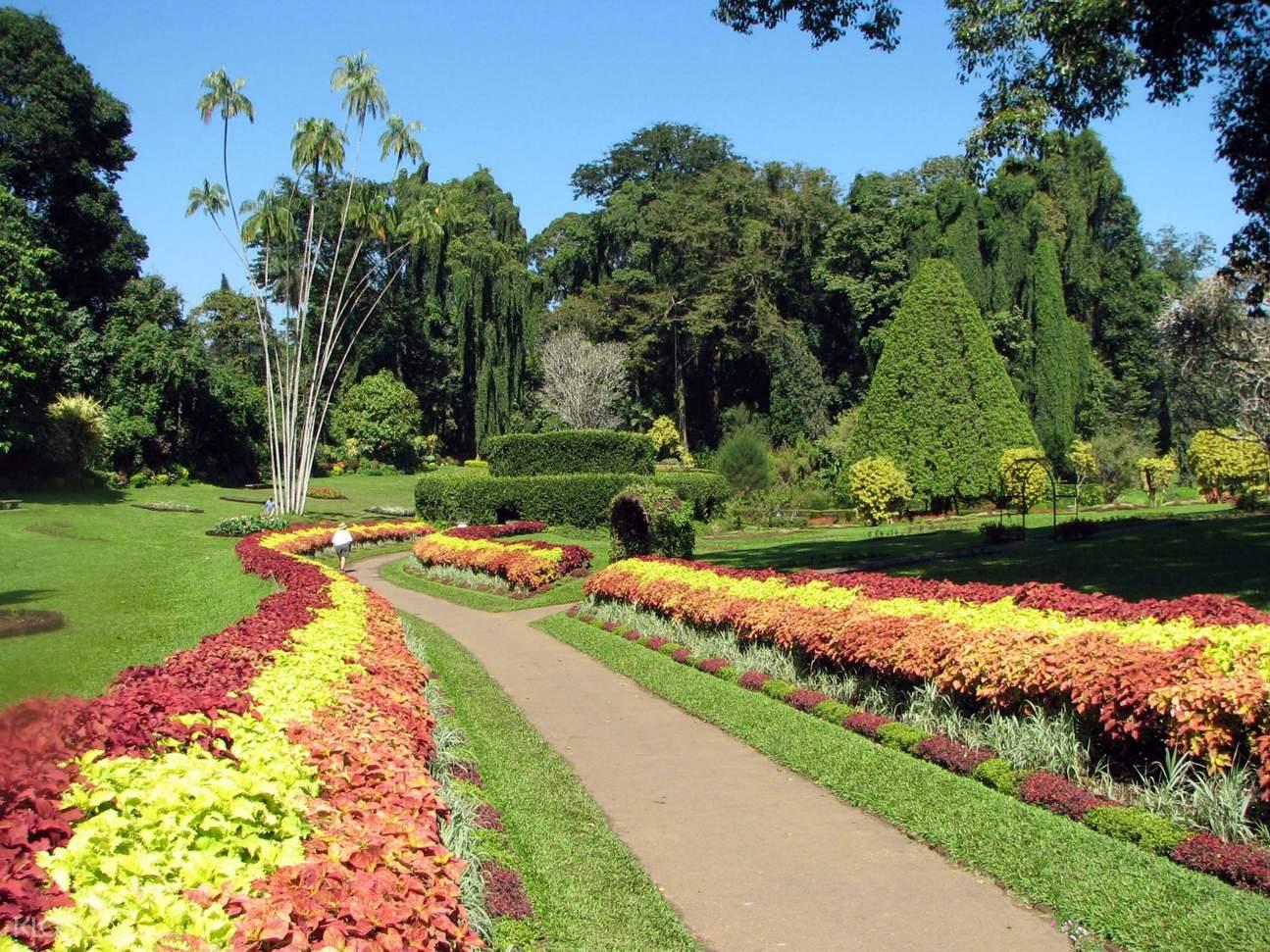 斯里兰卡 康提 皇家植物园