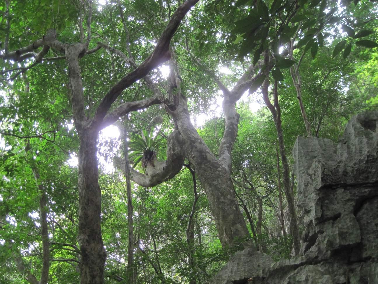 越南富國島自然探索之旅