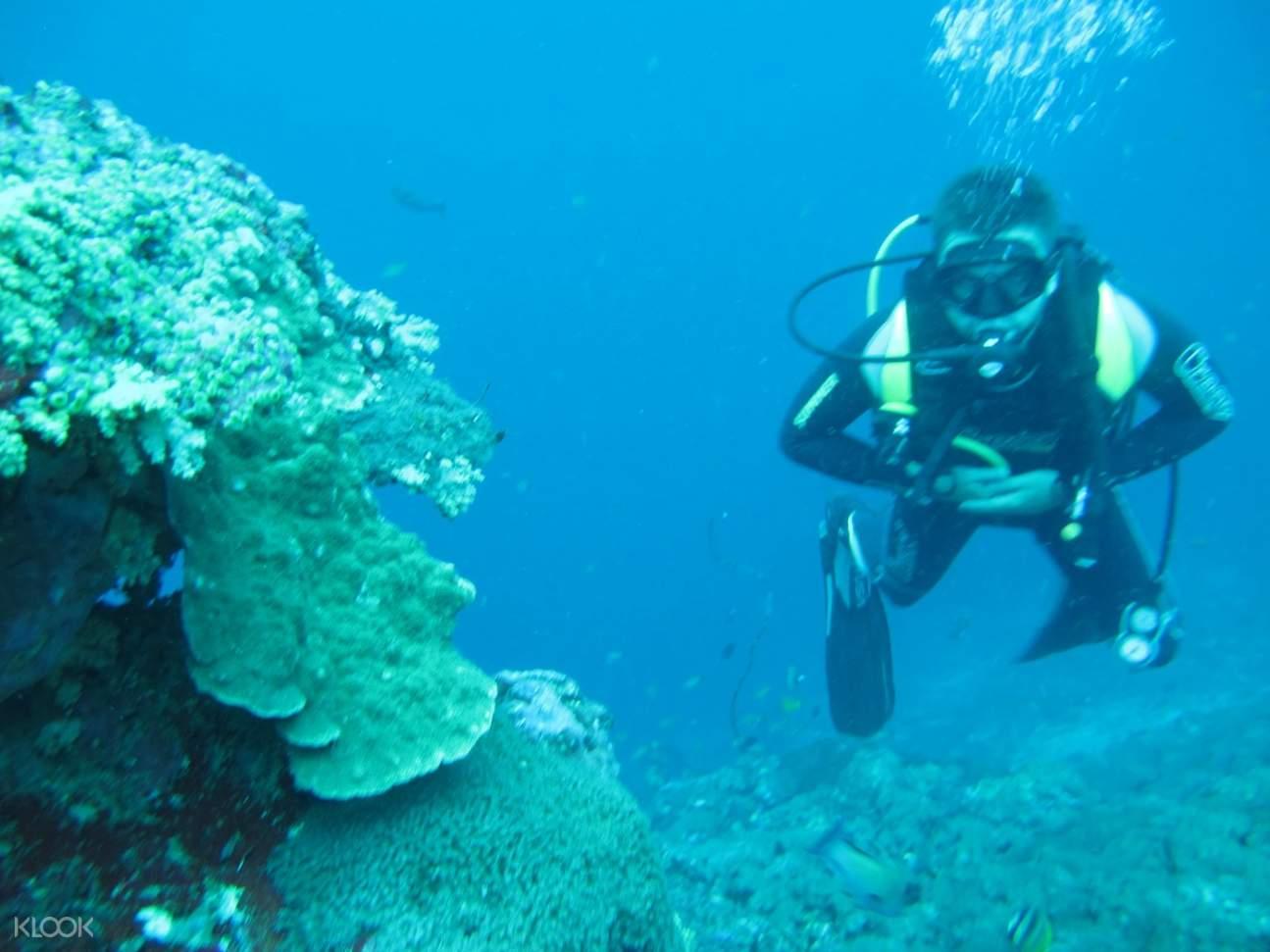 珀尼達島珊瑚,珀尼達島珊瑚礁,珀尼達島水肺潛水,珀尼達島水肺潛水體驗,珀尼達島潛水