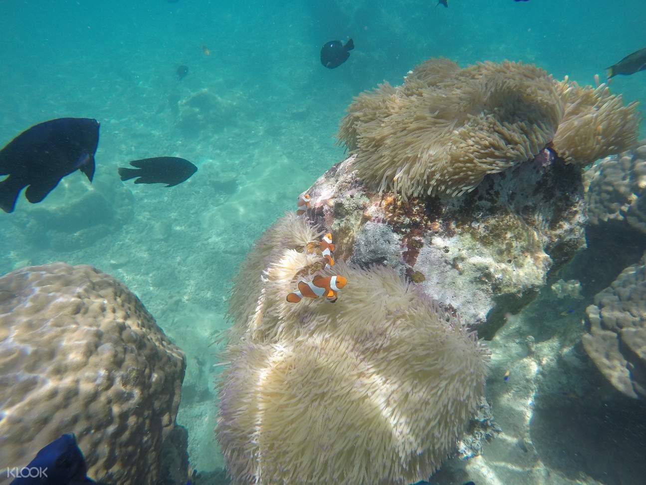 snorkeling experience sesoko