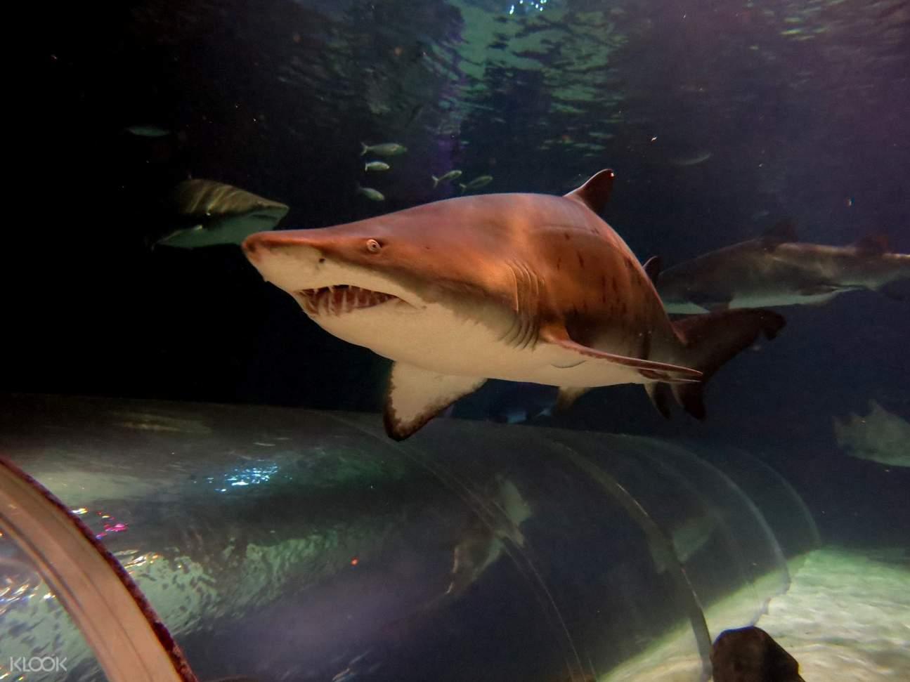 凱莉-塔爾敦海洋生物水族館鯊魚