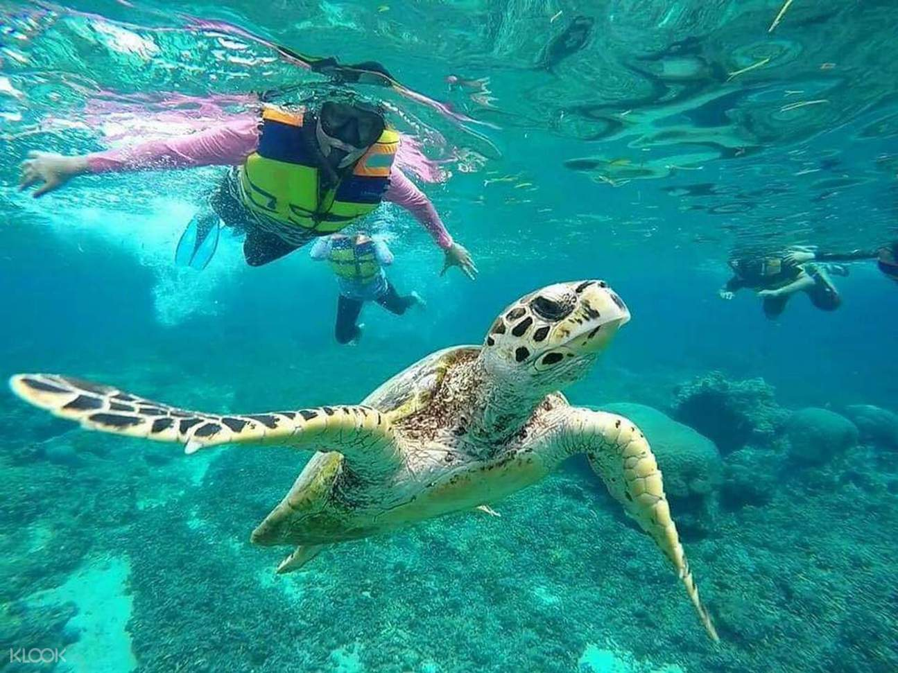 turtle in gili island
