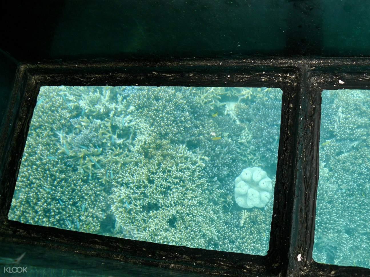 川平湾でグラスボート