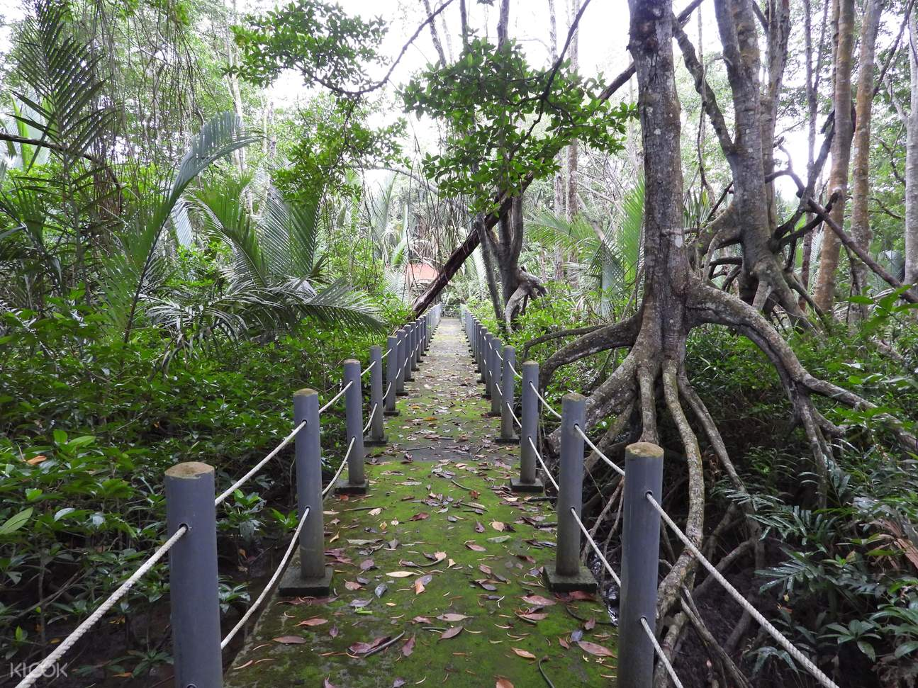 Walk way near forest