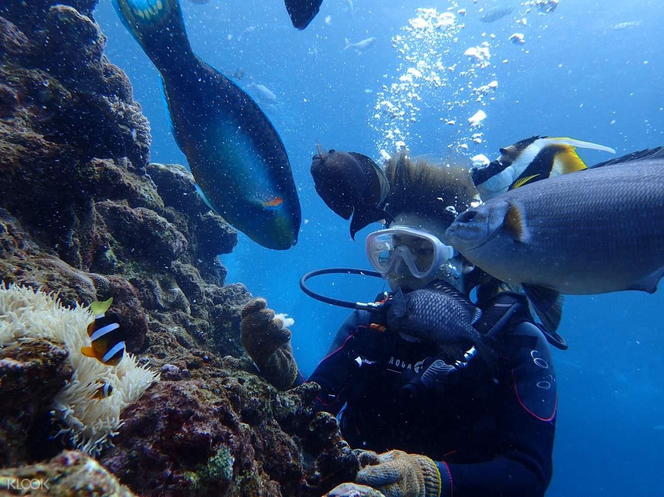 onna village underwater activities