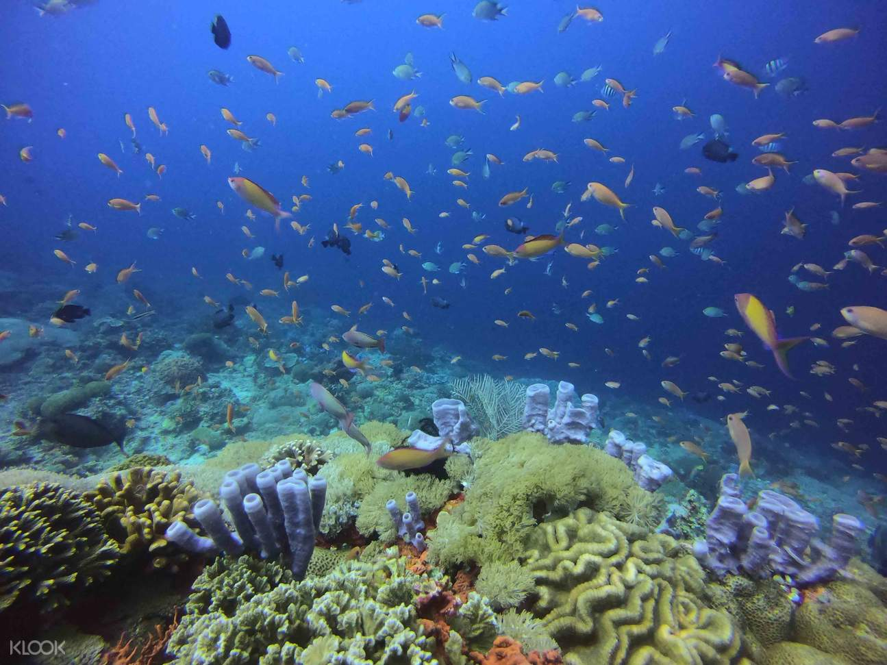 Have a chance to meet amazing corals and marine life!