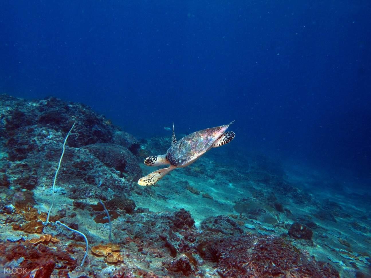 marine life diving koh phi phi