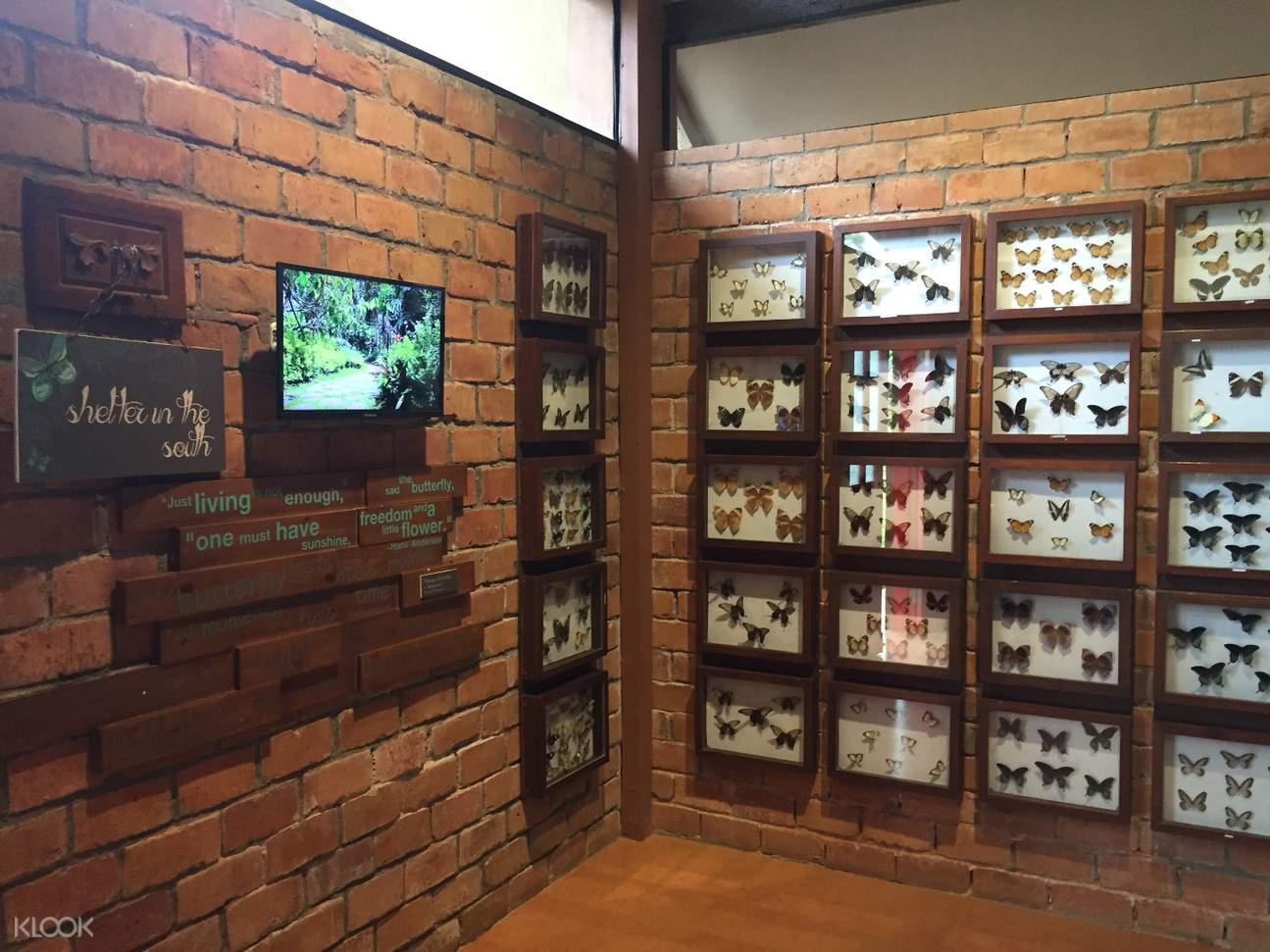 museo de mariposa displays