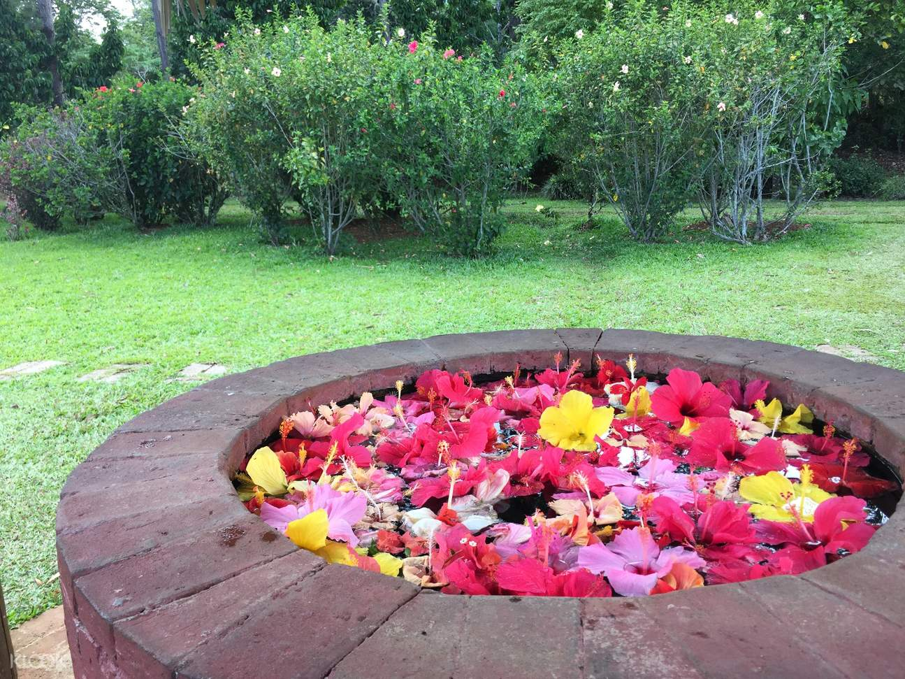 pit full of flowers