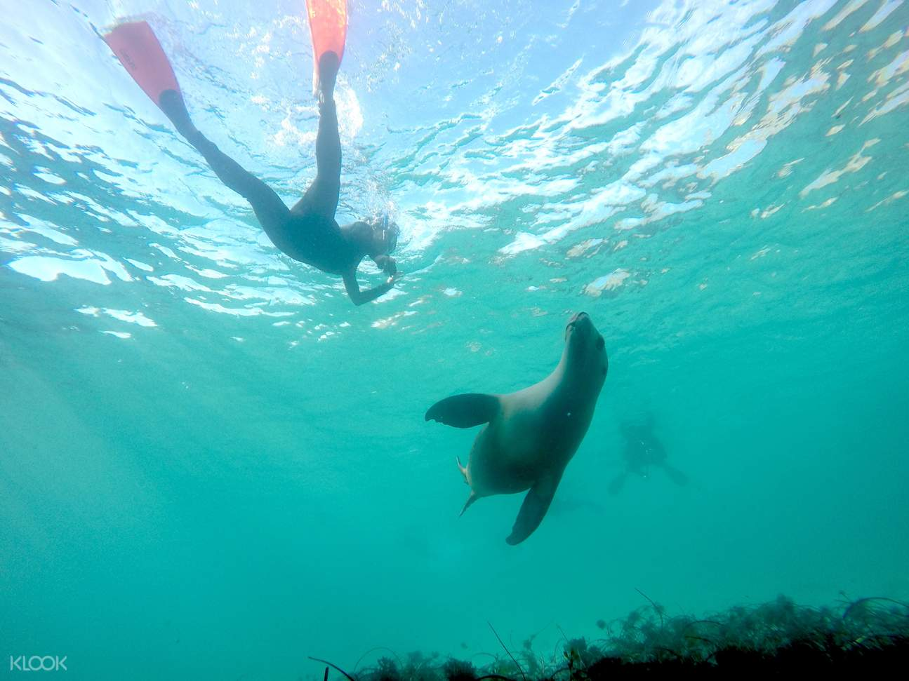 swim with sea lions port lincoln