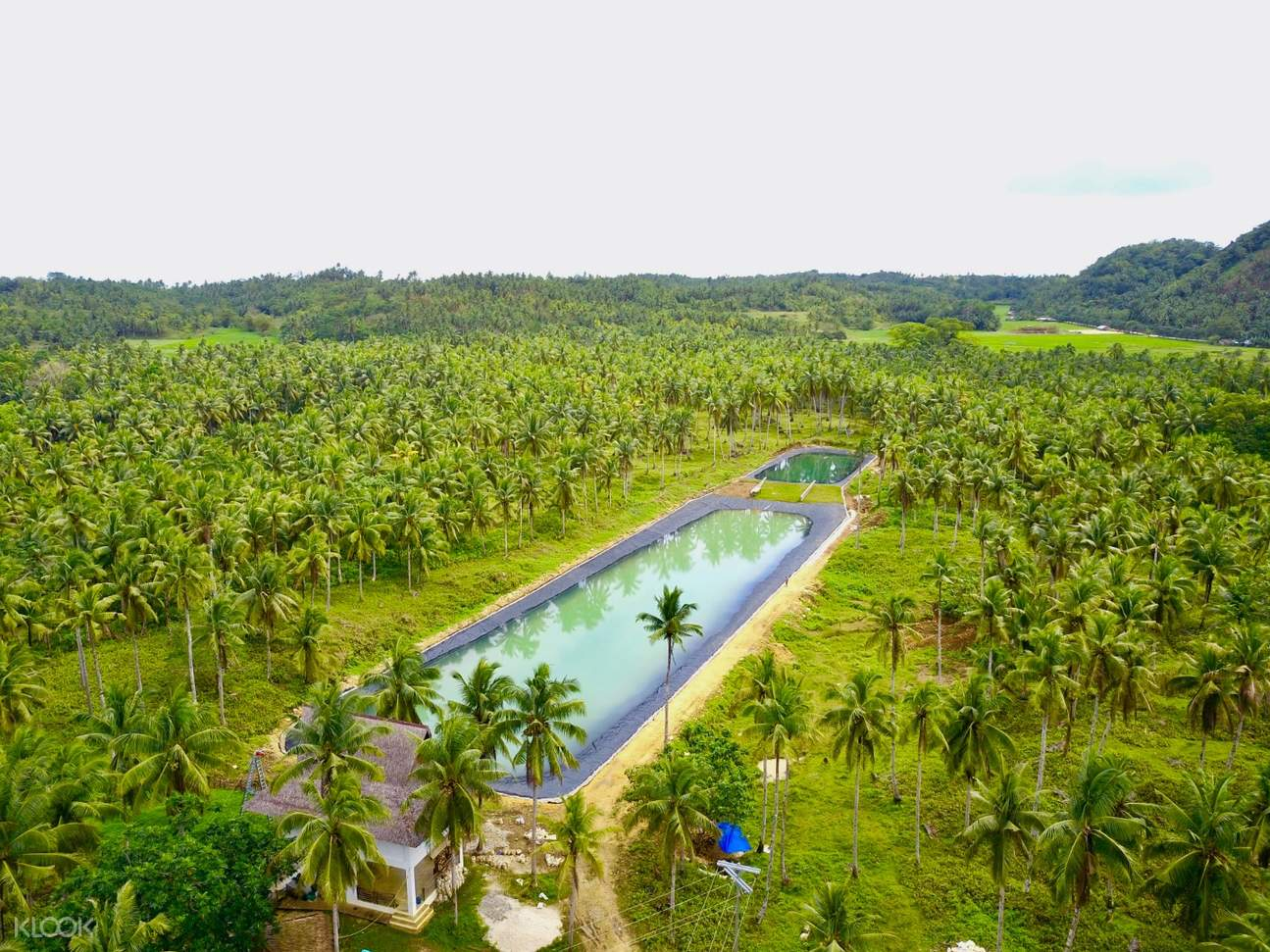 lush forest in siargao