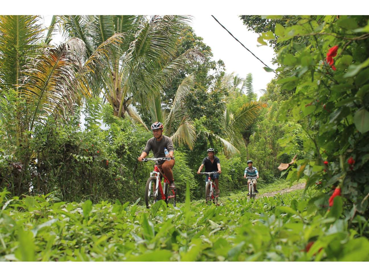 tourists cycling in bali's forest