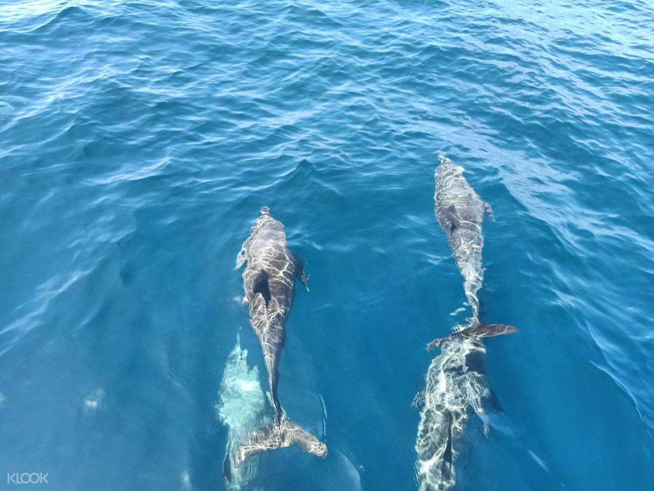 a day you can meet these dolphins