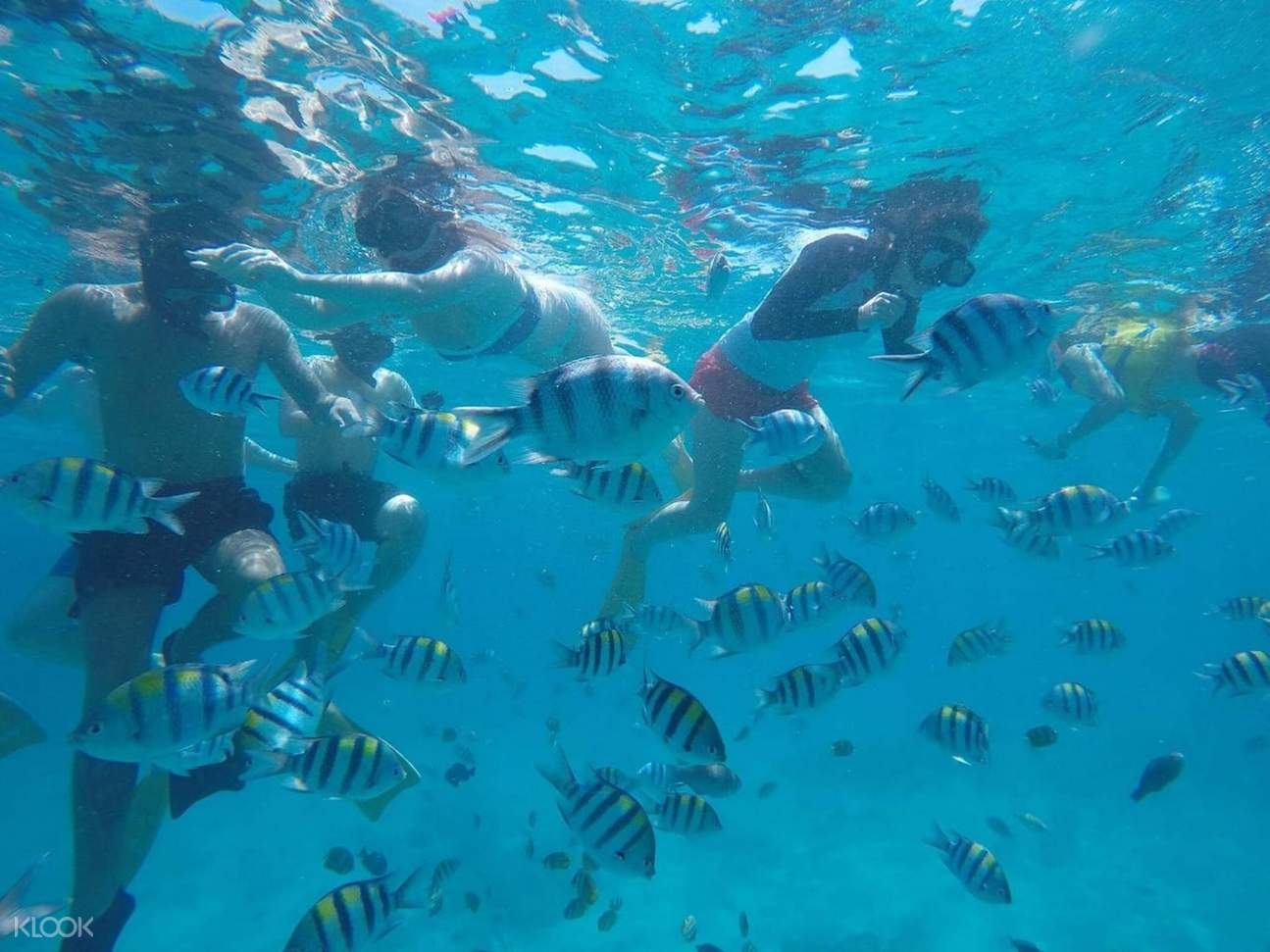 fishes in gili island