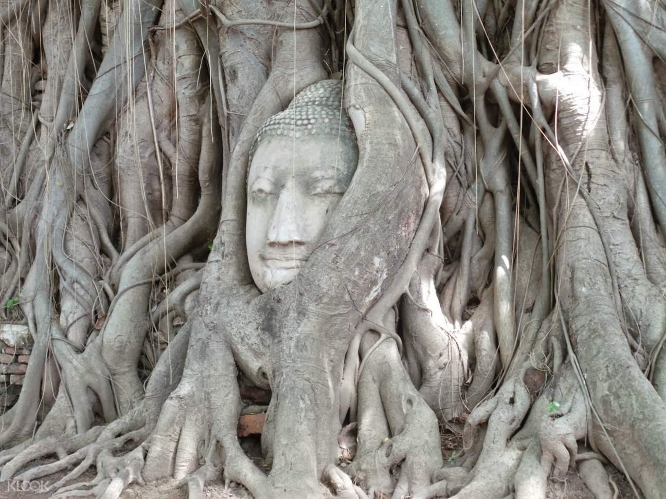 Buddha Head in Tree Roots at Wat Mahathat