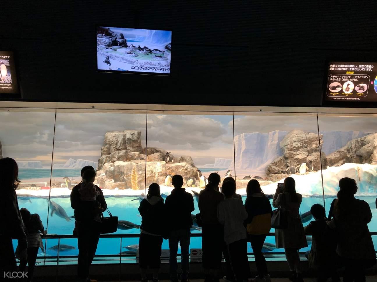 penguin aquarium