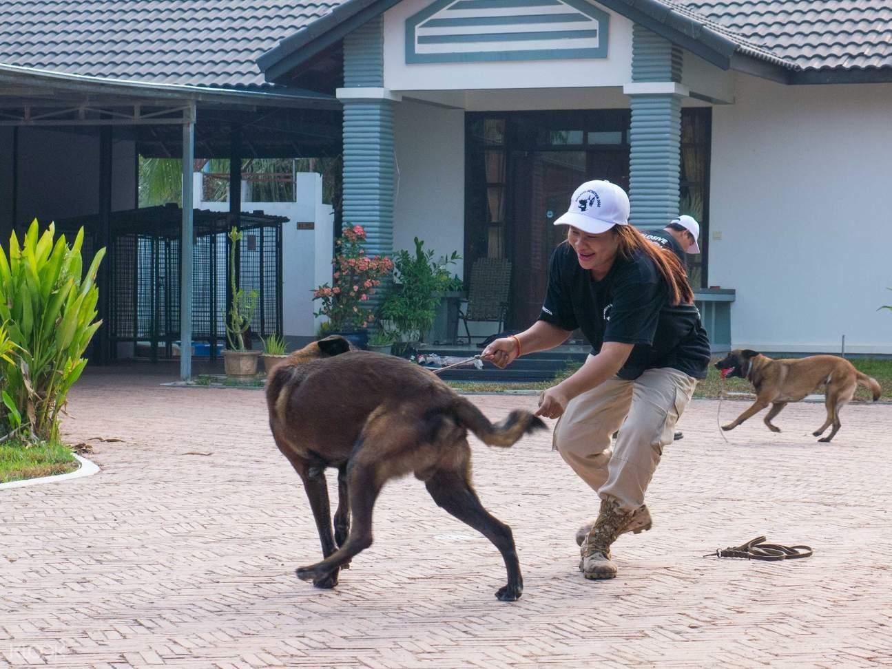 explosive detection dog show