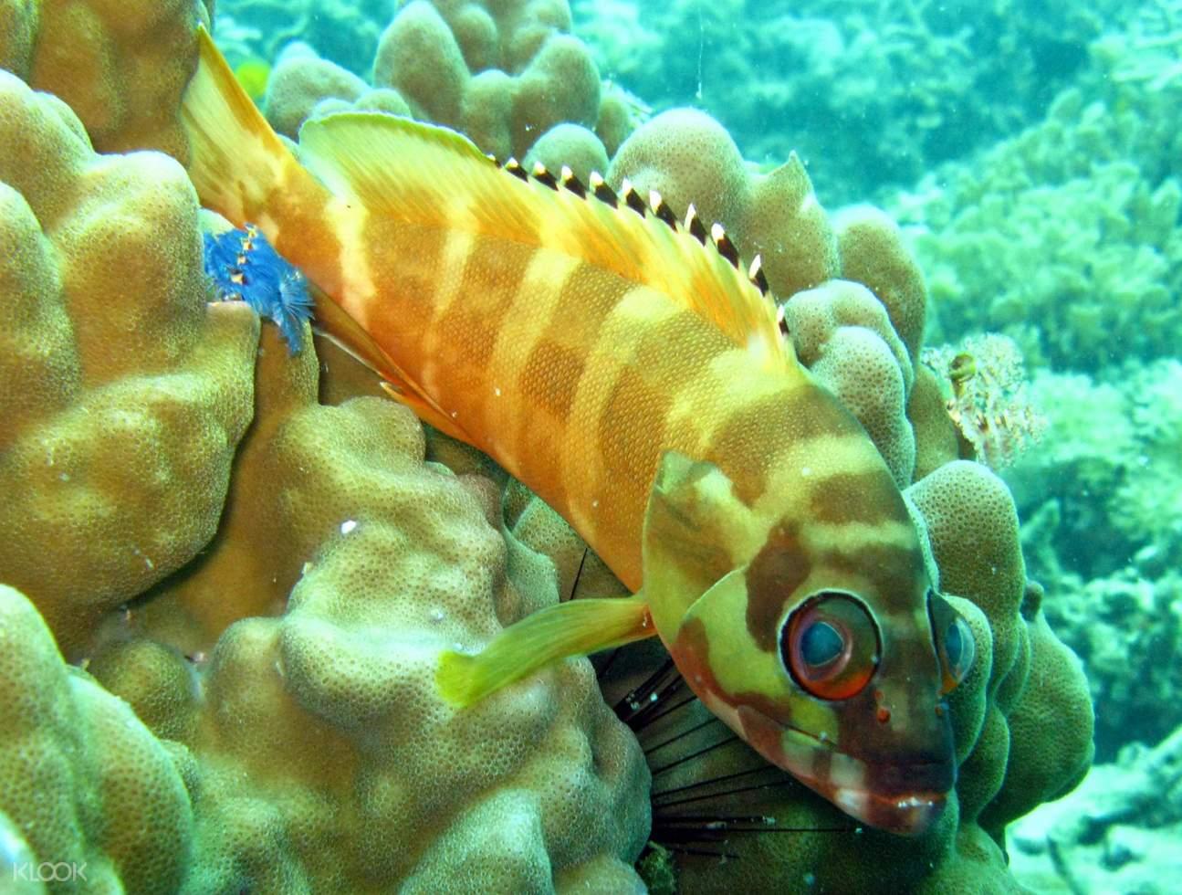 discover scuba diving course di koh samui