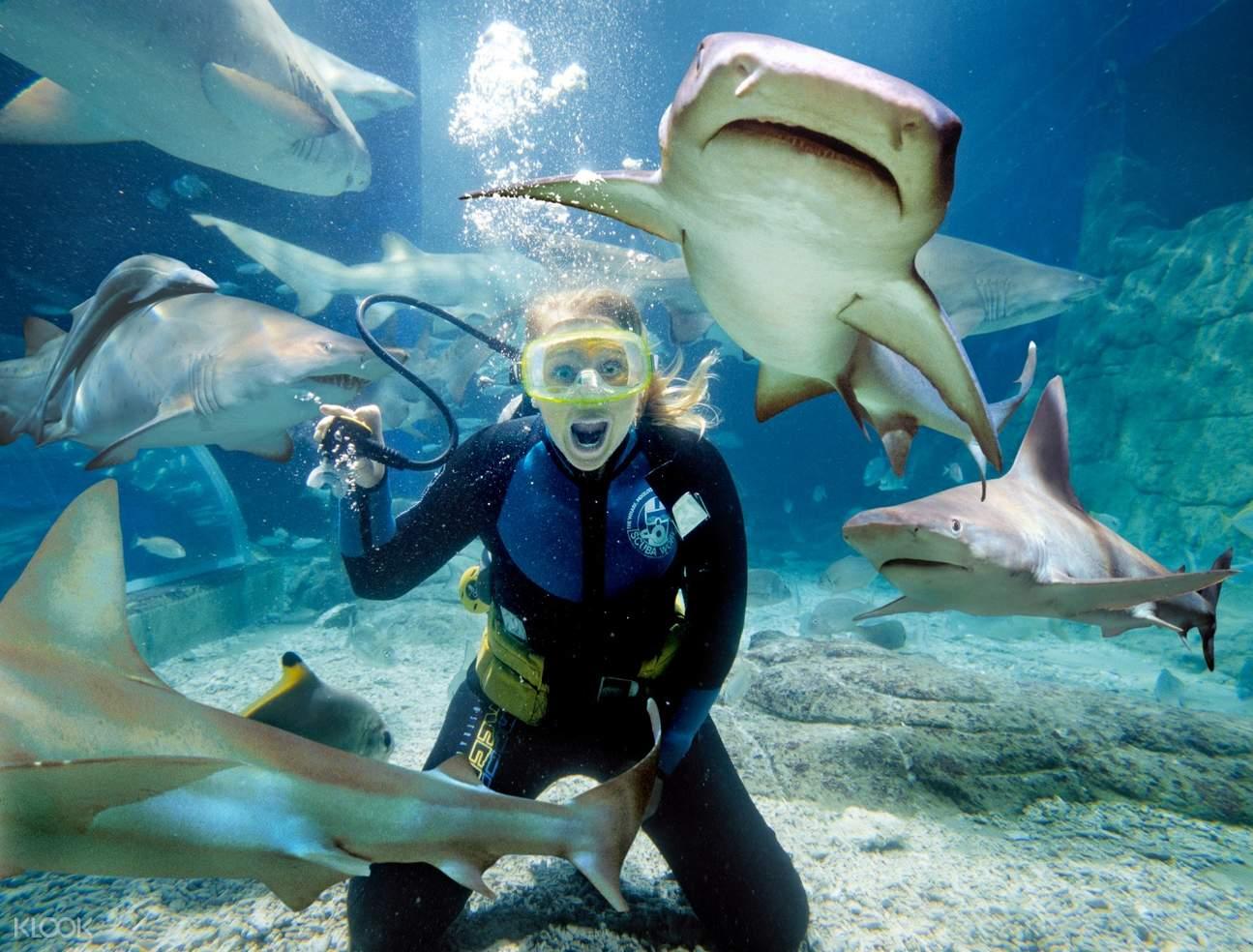 shark dive xtreme melbourne SEA LIFE