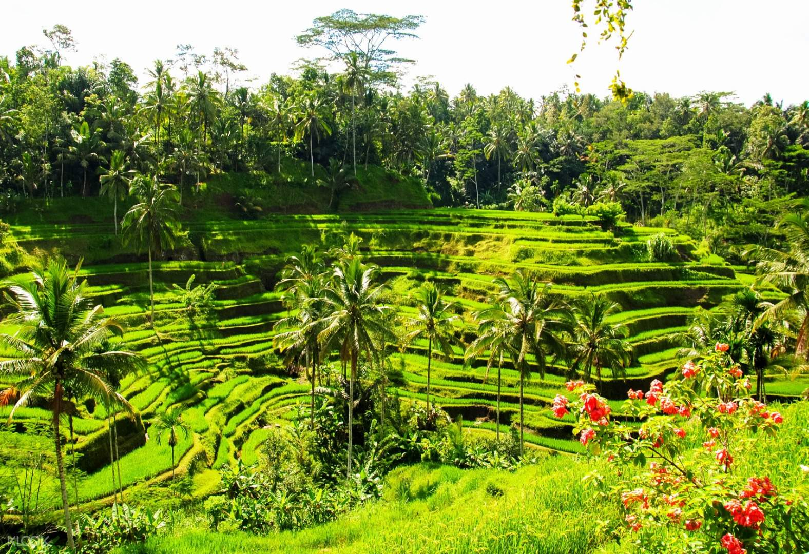 Bali Swing Ayung River Rafting And Ubud Tour With Massage Experience In Bali