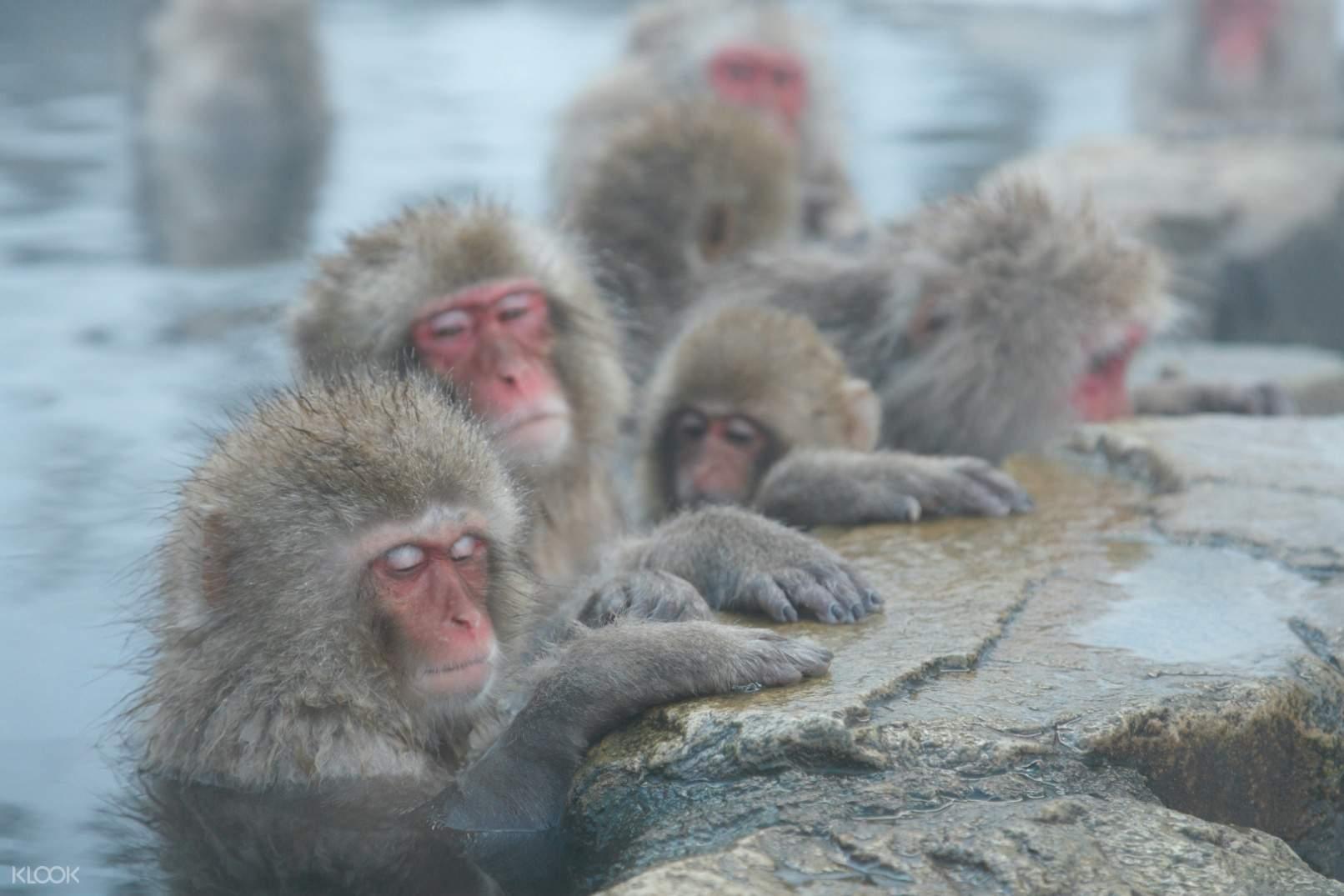 野猿 地獄 苑 谷 公