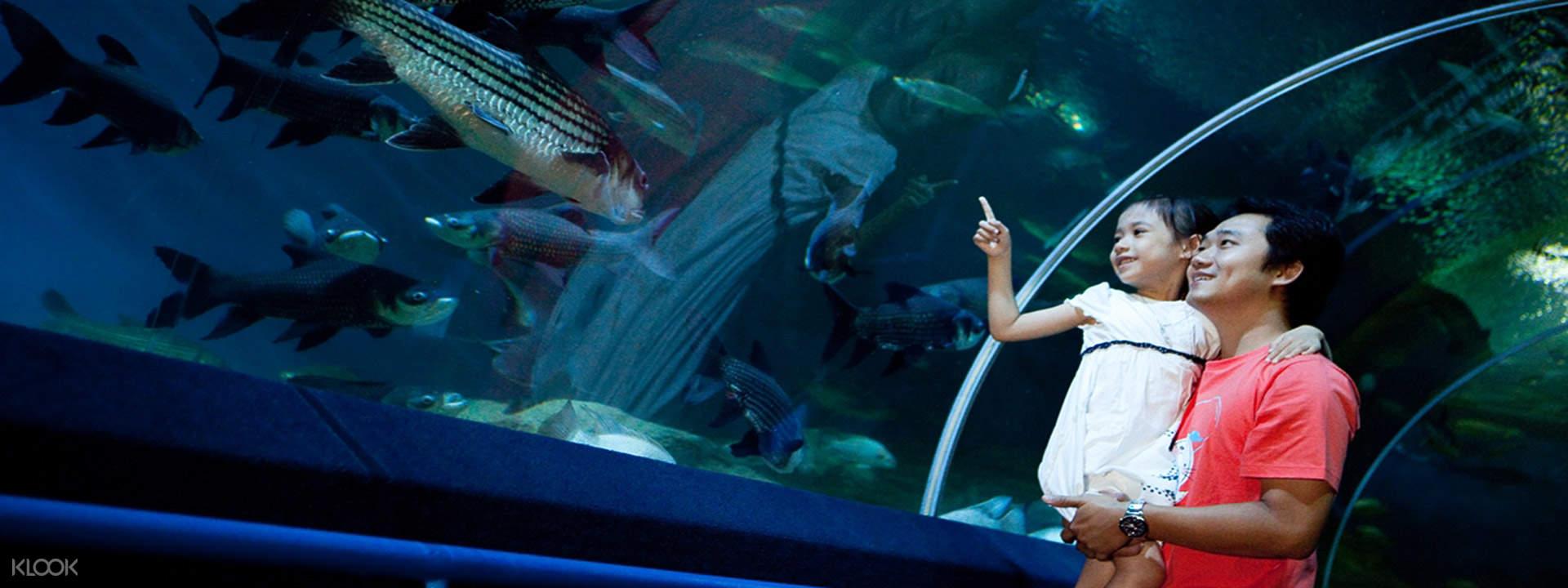Underwater World Pattaya Klook Thailand Et Ticket Sea Life Ocean Aquarium Only Adult Log In