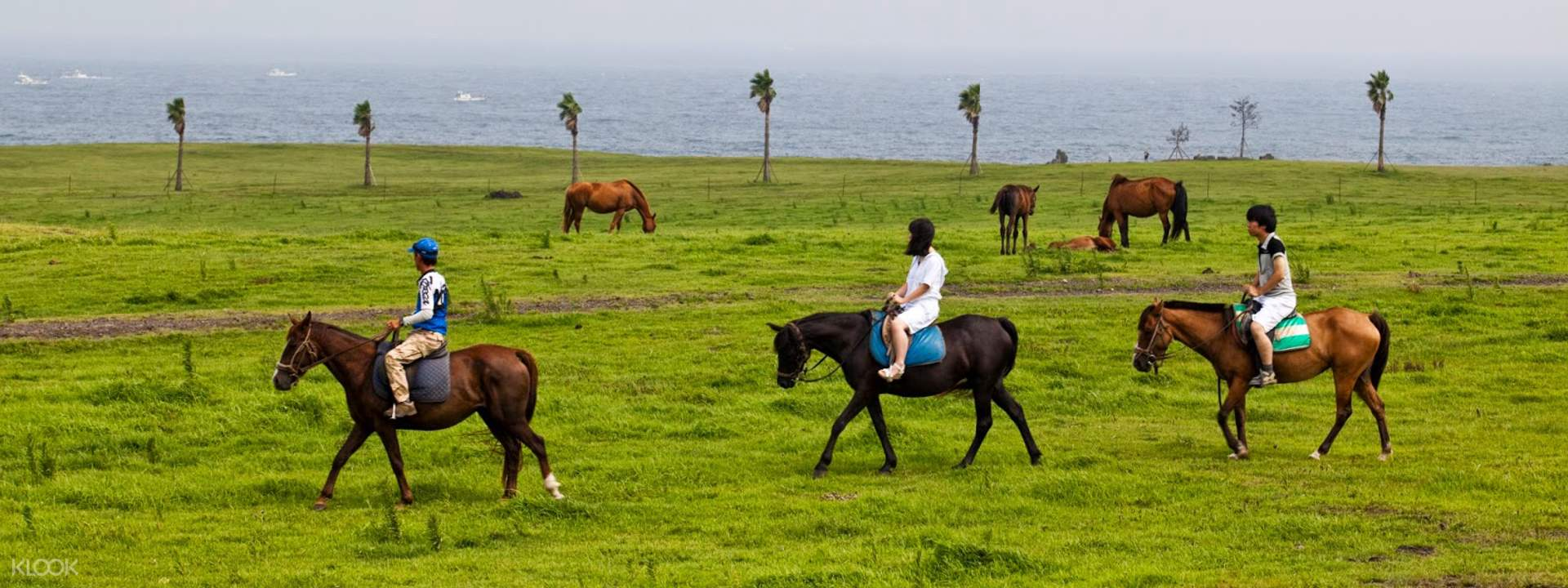 Jeju Land Horseback Riding - Klook