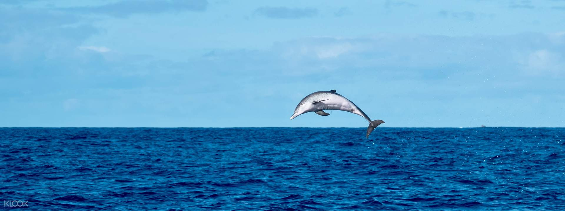 Dolphin Spotting Tour - Klook