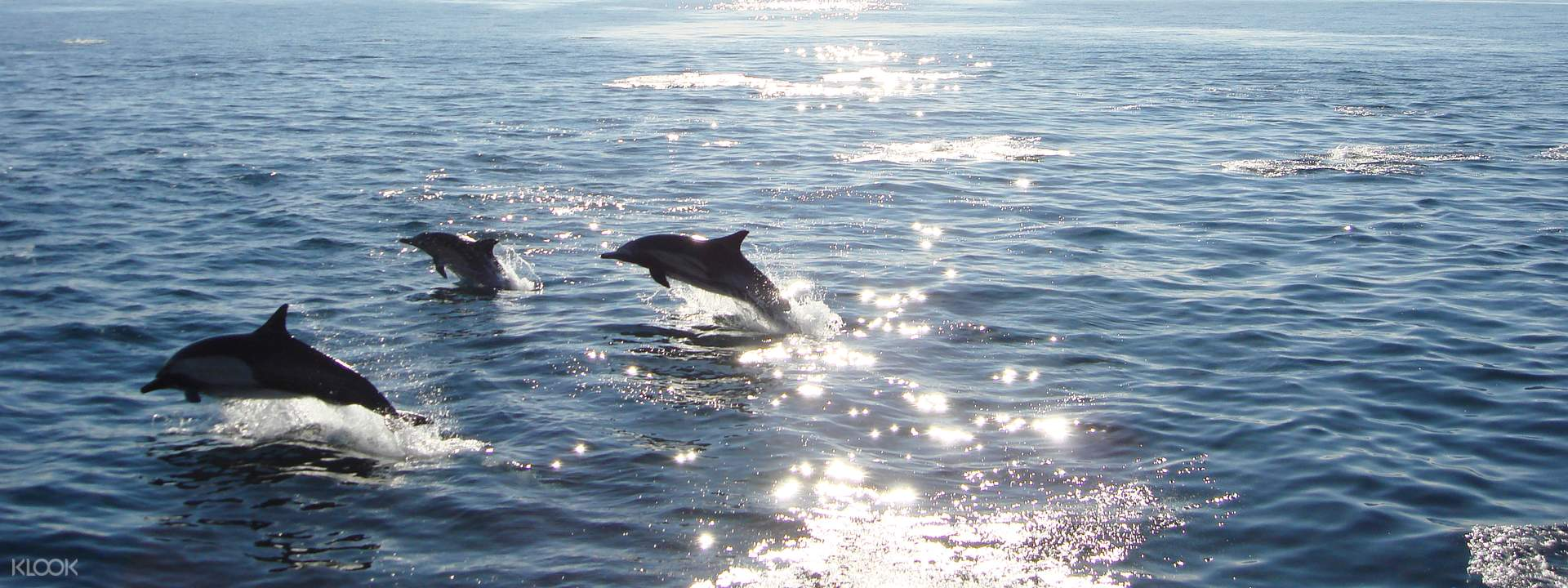 Davey's Locker Whale Watching Cruises from Los Angeles - Klook