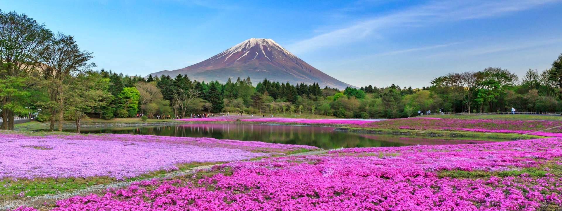 【富士芝櫻祭】走訪河口湖芝櫻&富士山五合目&採摘草莓一日遊 - KLOOK客路