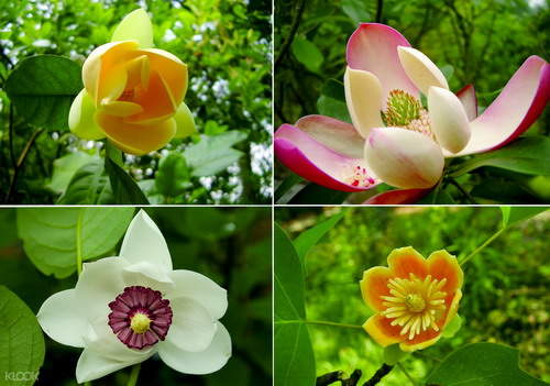 south china botanical garden ticket