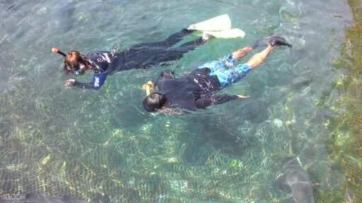 Bali shark swim