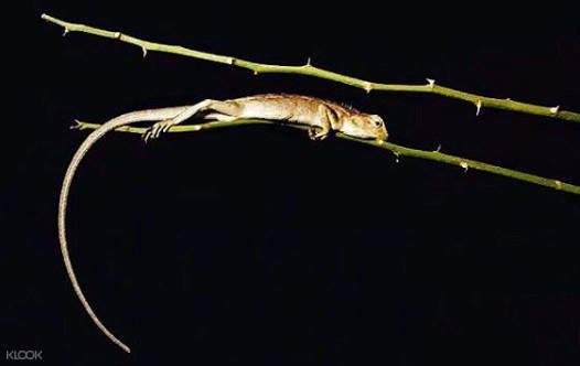 wildlife tracking in thailand