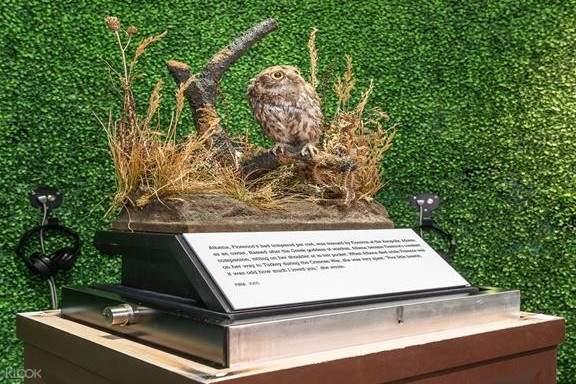 Florence Nightingale's pet owl