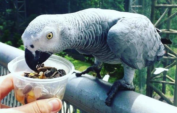 Melaka Bird Park