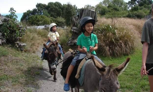 children riding donkeys