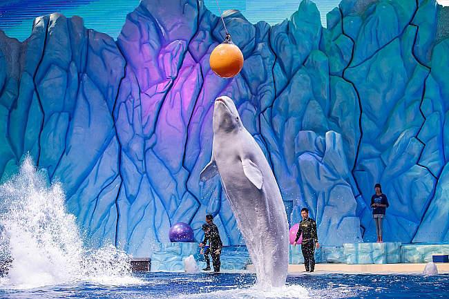 珠海长隆海洋王国,珠海长隆海洋王国门票,长隆海洋王国,长隆海洋主题公园