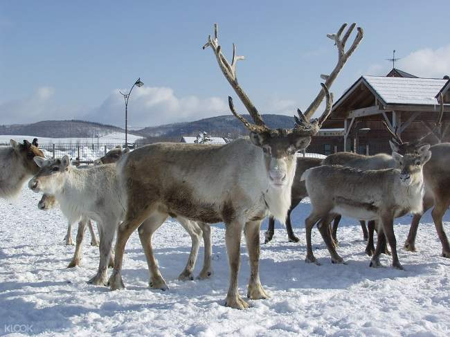 reindeer ranch private tour
