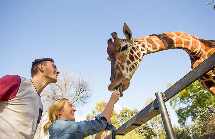 阿得雷德動物園